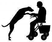 picture of dog-walker  - Detailed and accurate illustration of old woman with dog - JPG