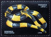 Postage Stamp Tanzania 1996 Banded Krait, Snake