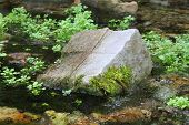 Stream with rocks and small trees around it