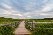 A Wooden Bridge Over A Marsh In The Cavendish Dunelands
