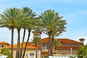 Building and palms of Miami Beach Florida.