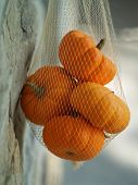 Netted Sugar Pumpkins