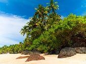 Landscape Goa