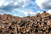 Woodpile Of Cut Lumber