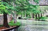 picture of greenery  - The San Antonio River Walk offers the visitor shade trees and lush greenery - JPG