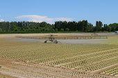 Intensive Irrigation In Vegetable Field