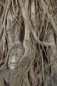 Hand Root Tree Carry Buddha Head