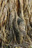 Buddha Face In Root