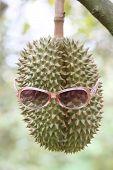 Fresh Durian Fruit Wearing Sun glasses On Trees.
