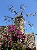 Historical Windmill With Flourishing Bougainvillea, Majorca