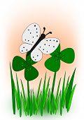 Butterfly in Clover Meadow