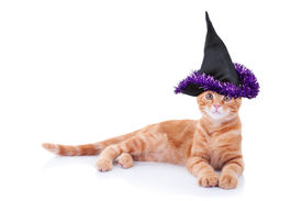 pic of sorcerer  - Halloween witch pet cat in a costume - JPG