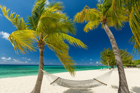 stock photo of mile  - Palm trees on the 7 mile beach in Grand Cayman - JPG