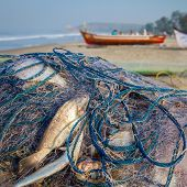 Fish in the net on the beach