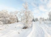 Hoge Venen In Snow