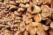 Woodpile Of Stacked Wood Logs