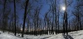 picture of moonlight  - Forest panorama at a winter moonlight night - JPG