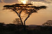 African Sunset, Serengeti, Tanzania