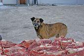 Hungry stray dog