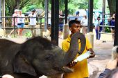 Baby Indian elephant fed milk