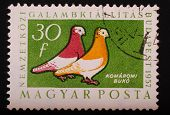 Hungary - Circa 1957: Postage Stamp Printed In Budapest Pokazyaaet Image Of Two Colorful Pigeons On