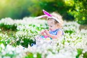 image of baby easter  - Adorable curly toddler girl wearing bunny ears playing with Easter eggs in a white basket sitting in a sunny garden with first white spring flowers - JPG