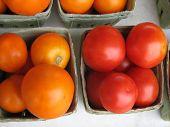 Tomatoes 367