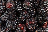 Closeup of Mulberries