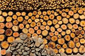 Stacked of firewood background