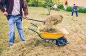 image of wheelbarrow  - Closeup of senior man filling wheelbarrow of hay with pitchfork and young man raking on the background - JPG