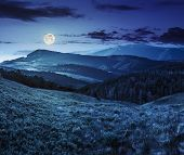 stock photo of conifers  - composite landscape with valley with wild grass near conifer forest in high mountains at night in full moon light - JPG