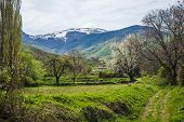 picture of snow capped mountains  - Meadow and fruit trees on the background of snow - JPG