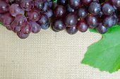pic of sackcloth  - bunch of ripe grapes on sackcloth background - JPG