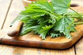 picture of sting  - fresh stinging nettle on a cutting board .