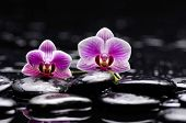 image of stone-therapy  - Still life with beautiful two orchid and therapy stones  - JPG