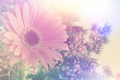 picture of gerbera daisy  - Gerbera daisy image with vintage retro effect - JPG
