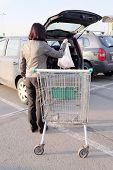 image of car carrier  - Supermarket - JPG