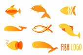 picture of fish  - Vector illustration of warm colors golden fishes - JPG