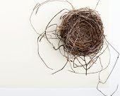image of cardinal-bird  - Bird Nest on Two - JPG