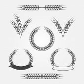foto of whole-wheat  - Wheat or rye icons set  - JPG