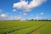foto of cannon  - Water cannon irrigating a field with tulips in spring - JPG