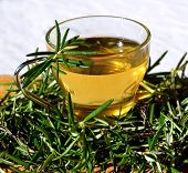 stock photo of naturopathy  - Herbal rosemary tea with green branches in a glass cup - JPG