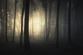 image of scary haunted  - Sunrise in a dark haunted forest with fog on Halloween - JPG