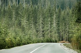 stock photo of timber  - Healthy coniferous forest with timber logs beside desolate road prepared for transportation in a wilderness area of national park - JPG