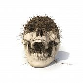 pic of gruesome  - human skull with a trailing vine with clipping path - JPG