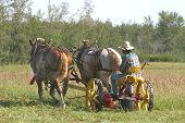 Teams Of Horses