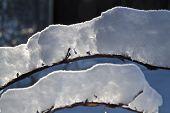 Backlit Snow Branch