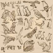 Постер, плакат: Birds Line Art Vector Pack