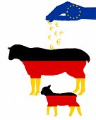 German Sheep And European Subsidies