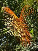 Red palm branch.
